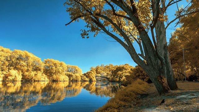 Золотые кроны деревьев на берегах реки в ясный день
