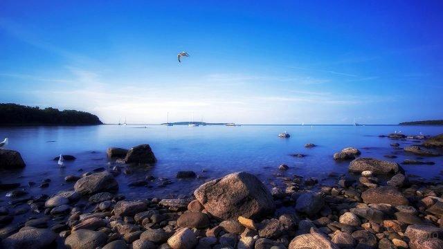 Чайка над пейзажем с яхтами у каменистого морского побережья в Канаде