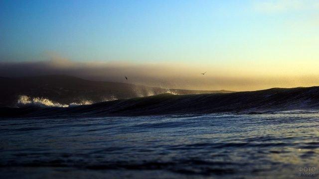 Птицы над брызгами набегающей волны
