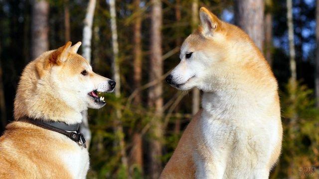Дружеское общение двух щенков