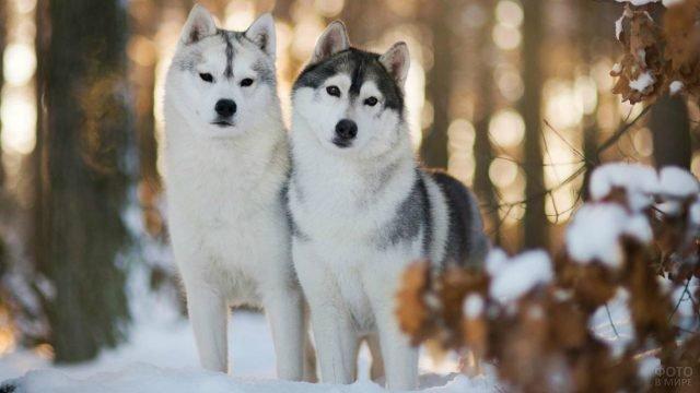 Две подружки в зимнем лесу