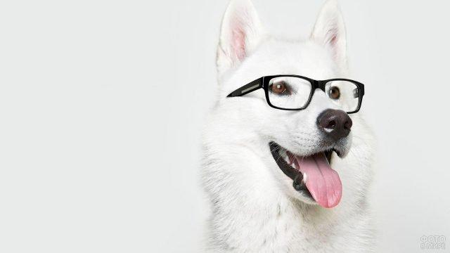Лайка позирует в очках перед фотографом