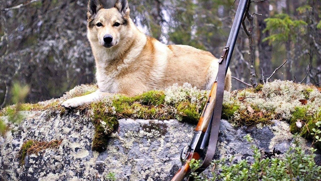 Охотничья собака на отдыхе в лесу
