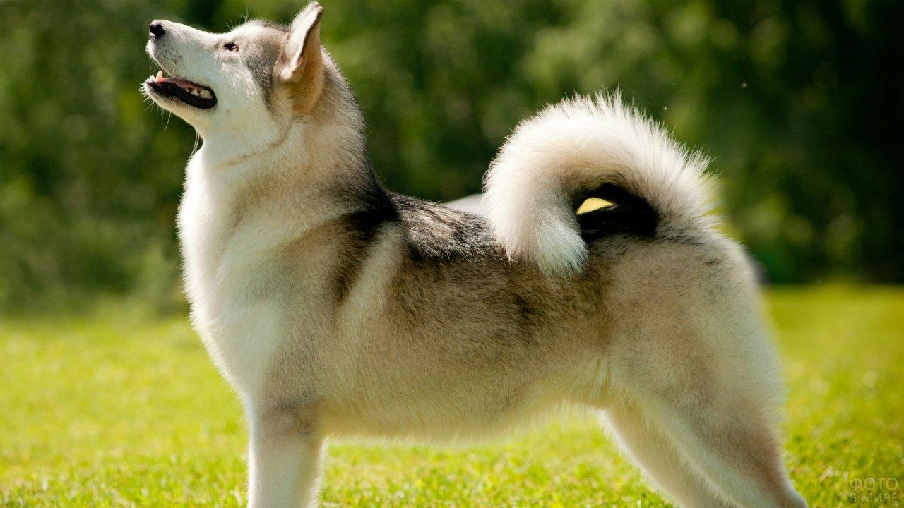 Собака греется на весеннем солнышке