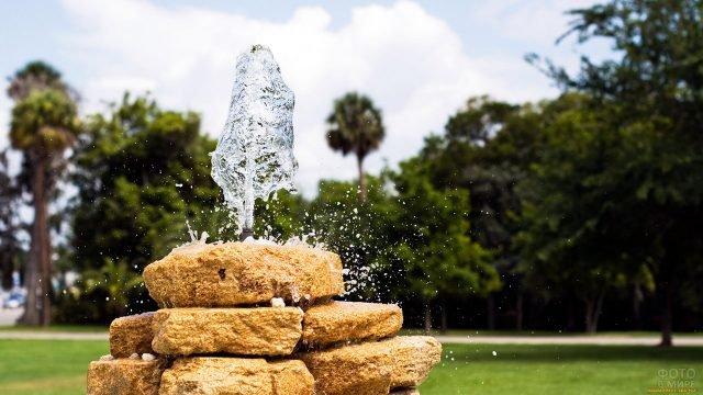 Хрустальные струи фонтанчика в тропическом парке