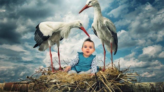 Аисты и ребёнок в гнезде