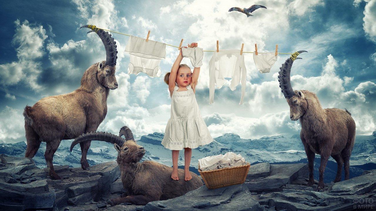Девочка развешивает бельё на веревке, натянутой на рогах козлов