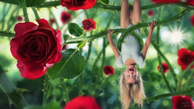 Девочка вниз головой на ветке розы