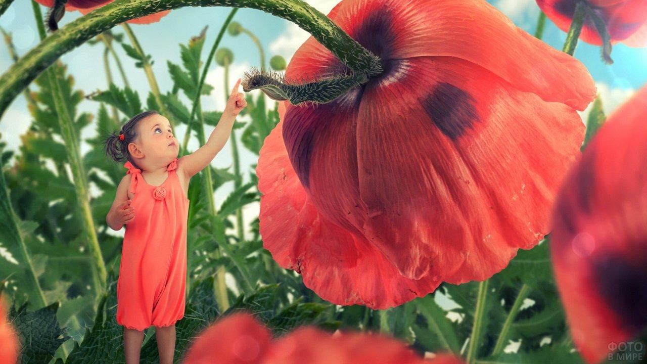 Маленькая девочка и гагантская гусеница на цветке мака