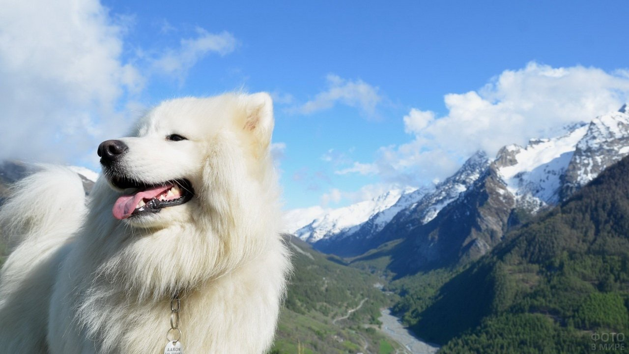 Белая пушистая собака на фоне гор
