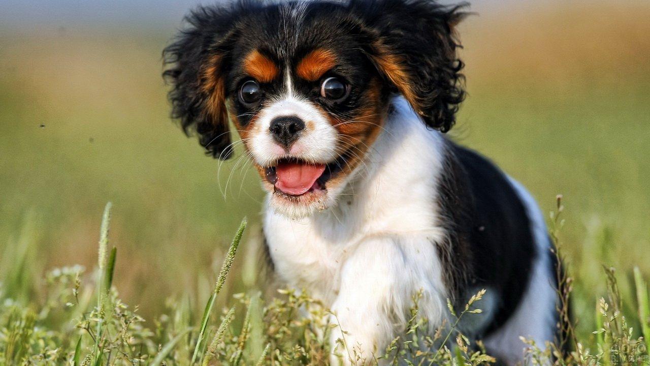 Дурашливый вид маленького щенка