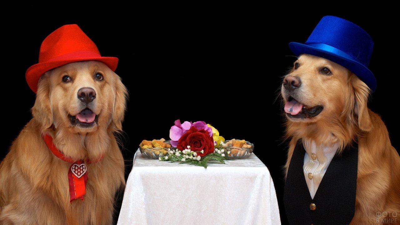 Две наряженых собаки на ужине в ресторане