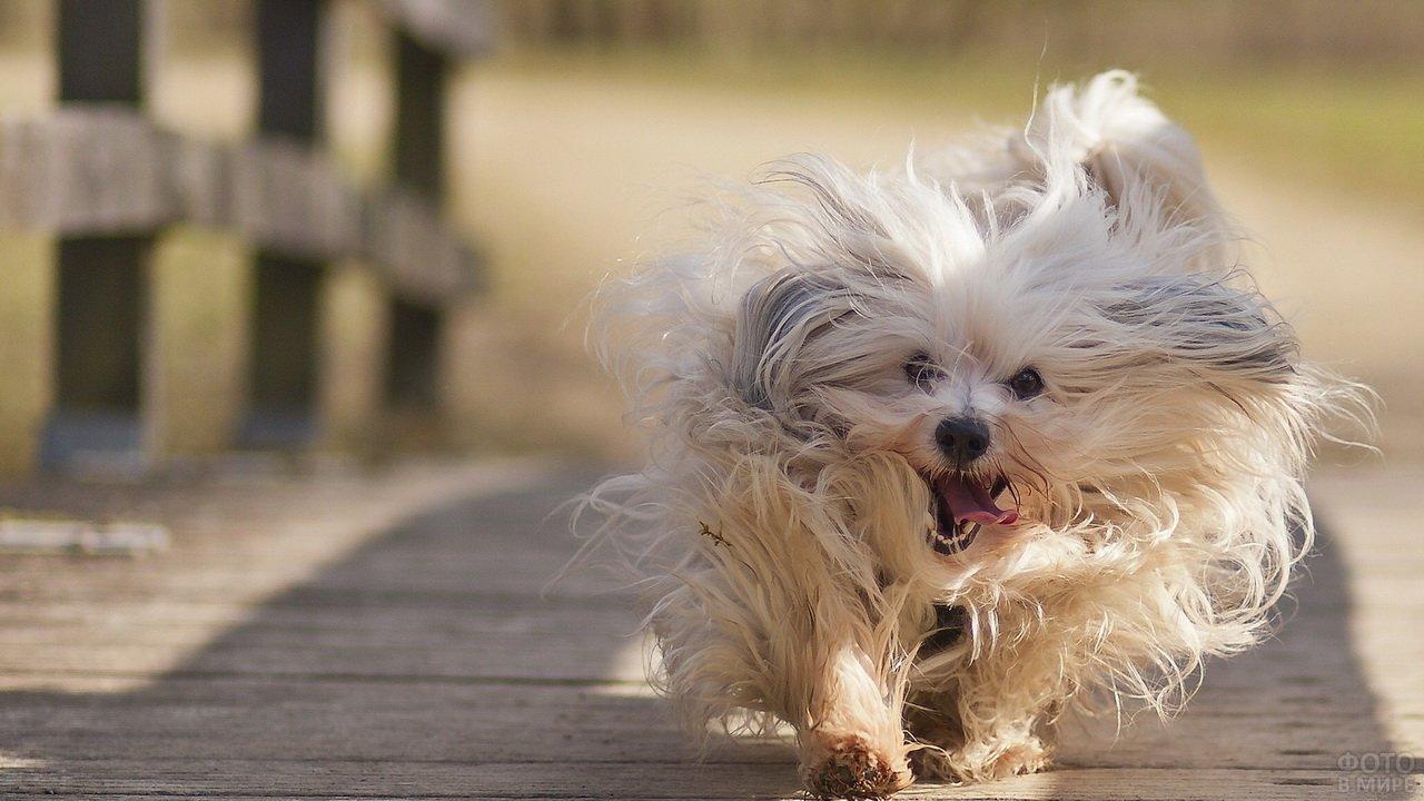 Лохматая радостная собака