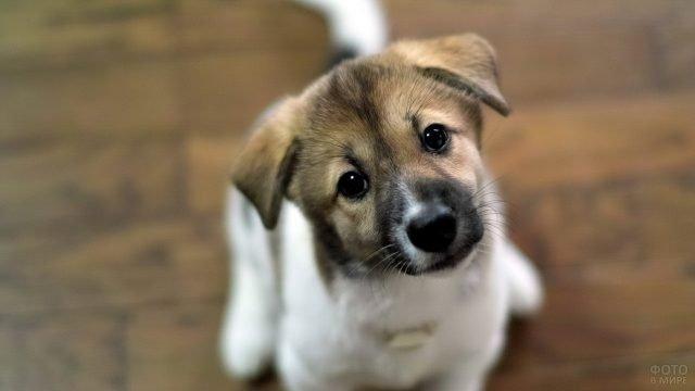 Милый щенок смотрит, наклонив голову