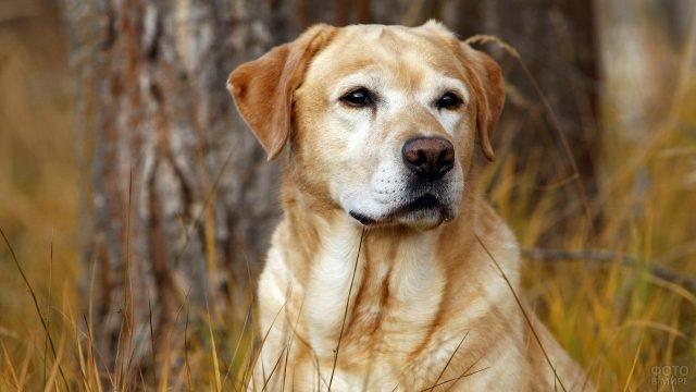 Охотничья собака смотри вдаль