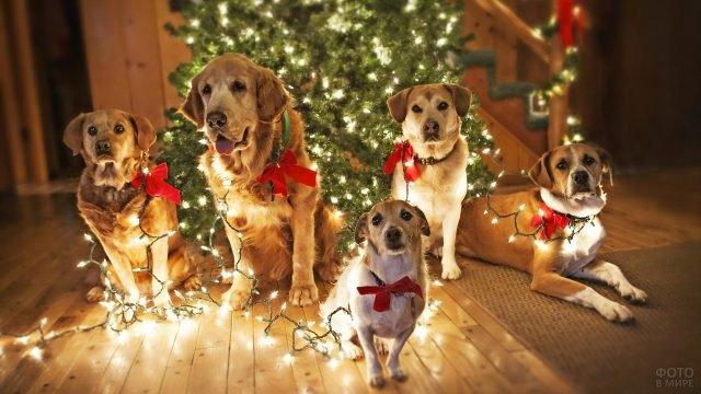 Пять собак с гирляндой у наряженной ёлки