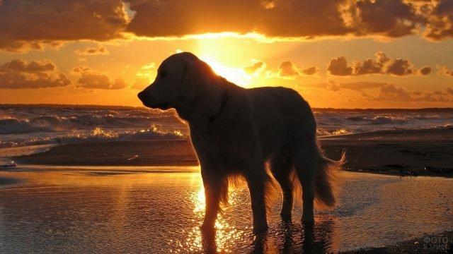 Пёс стоит на фоне заката