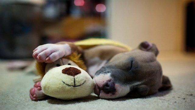 Щенок спит в обнимку с мягкой игрушкой