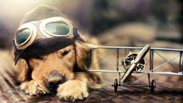 Собака-авиатор в лётном шлеме с моделью аэроплана