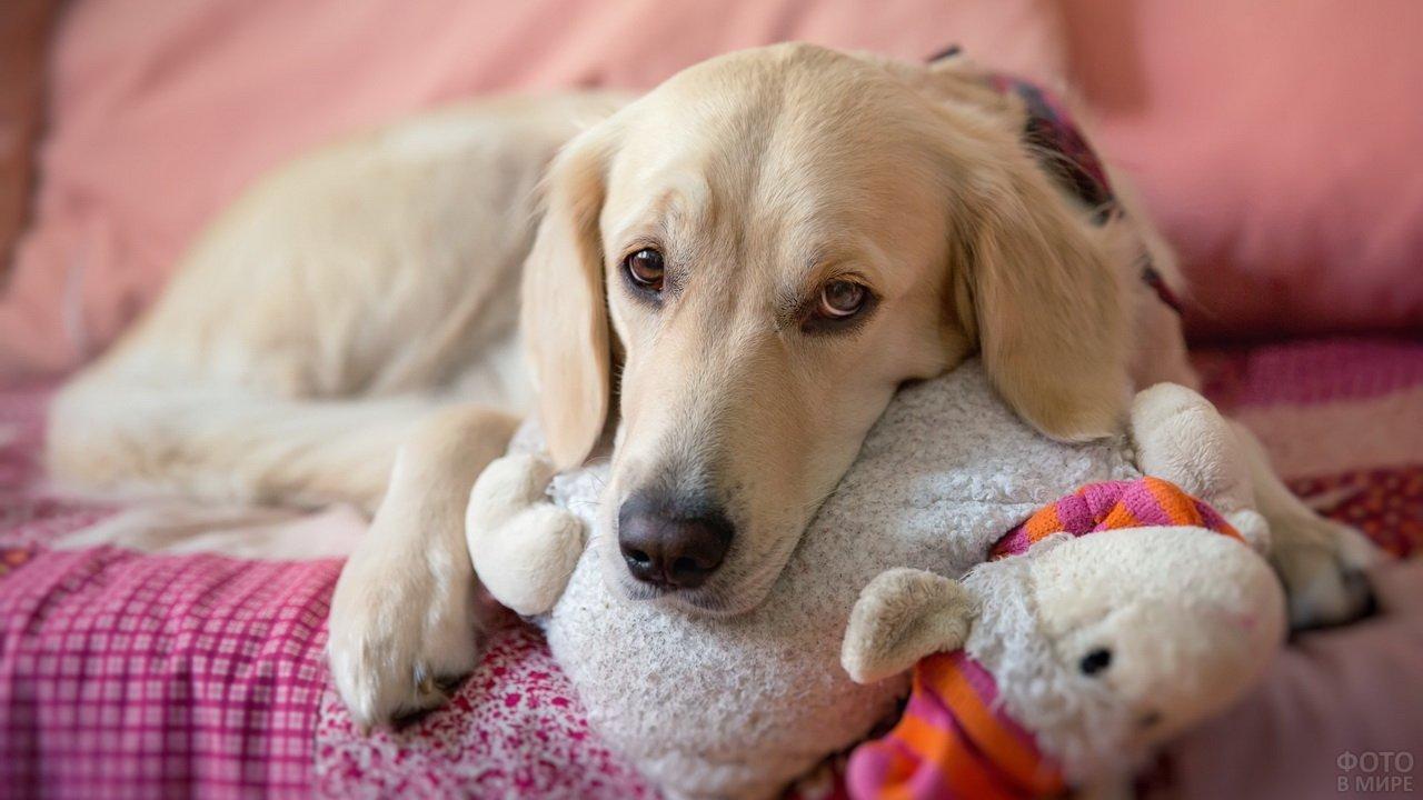 Собака с мягкой игрушкой на диване