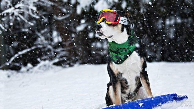 Собака в лыжных очках зимой