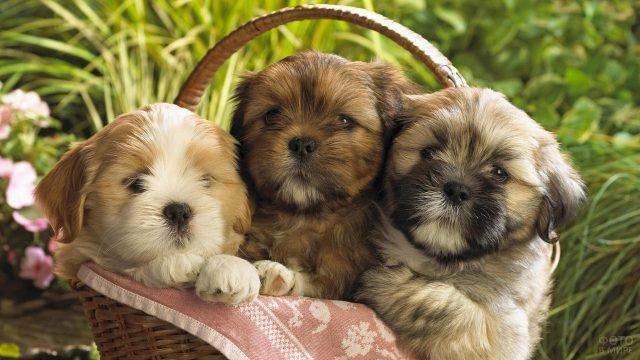 Три забавных щенка в корзинке