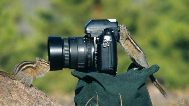 Бурундуки-фотографы с фотоаппаратом