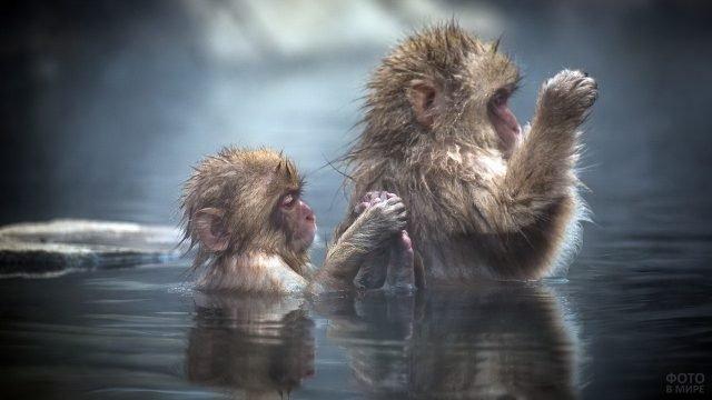 Мартышки молятся, стоя в воде