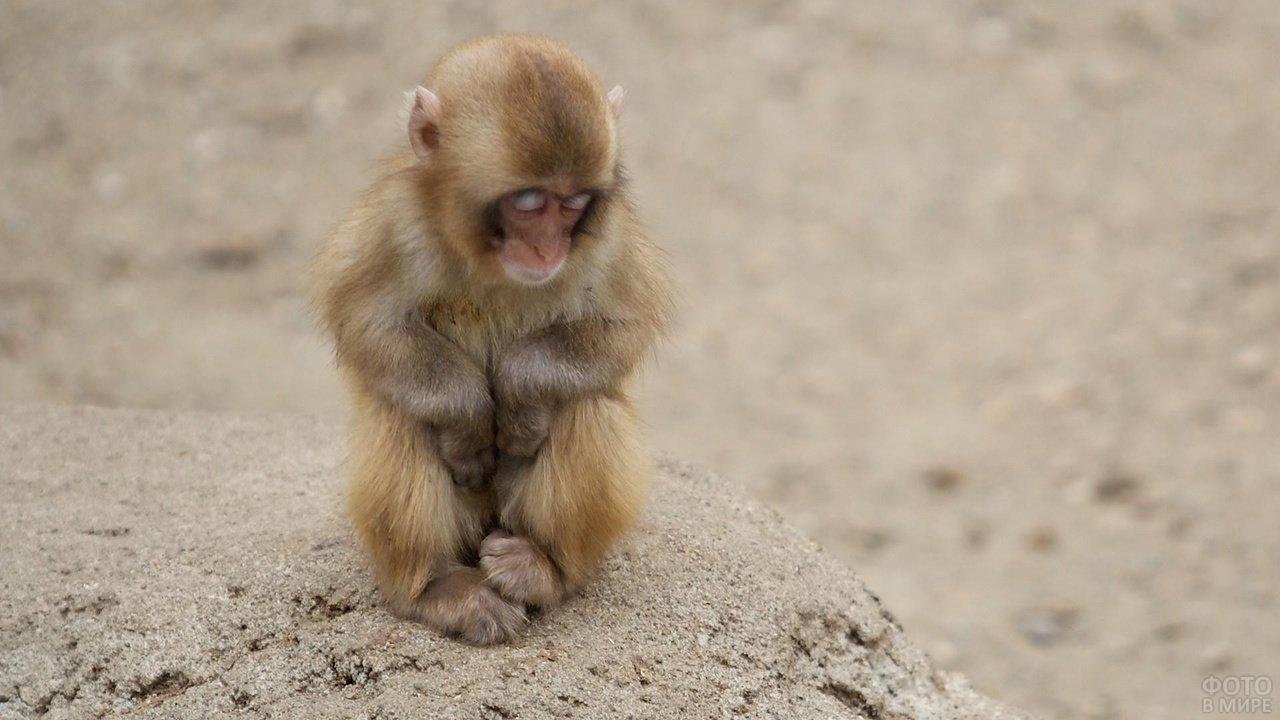 Очень грустная обезьянка
