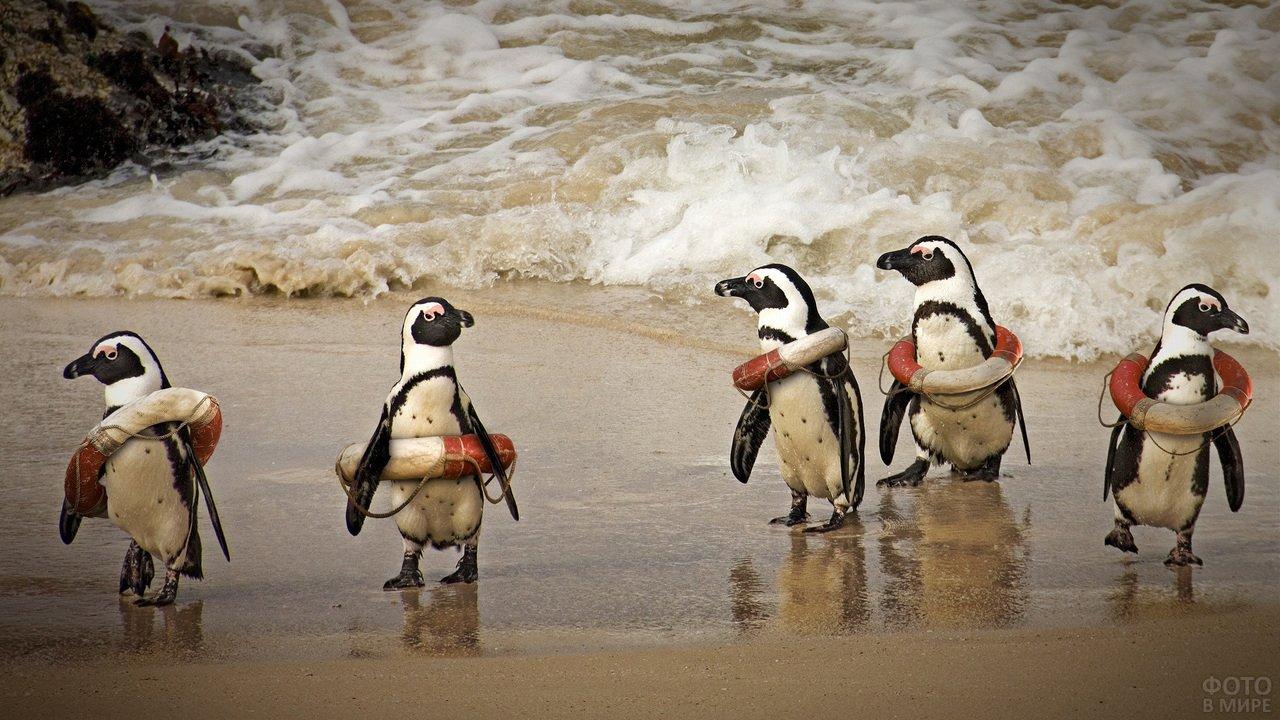 Пингвины со спасательными кругами