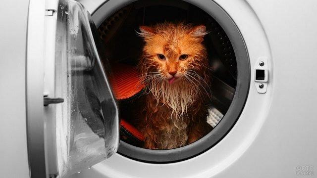 Постирали котейку в стиральной машине