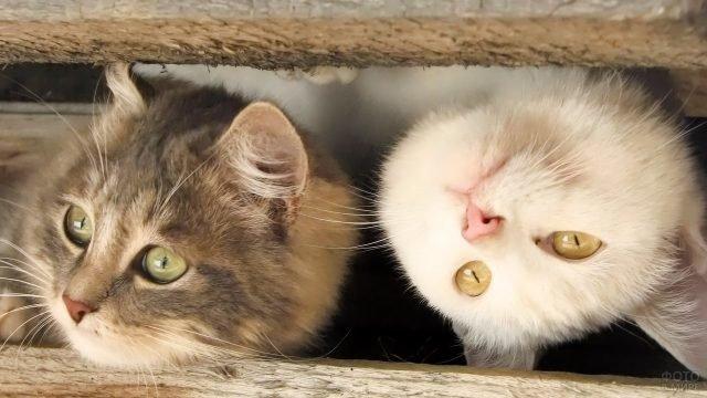 Прикольные котята выглядывают