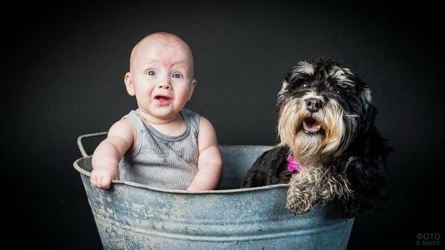 Ребёнок с собакой в старом тазу
