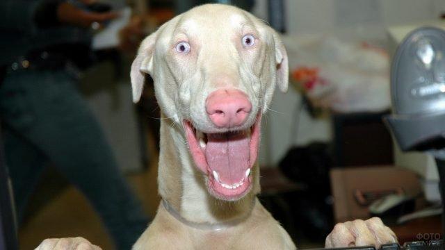 Смешная собачья морда