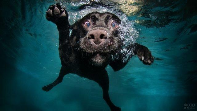 Собачья морда под водой