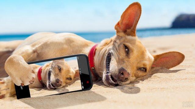 Собака со смартфоном