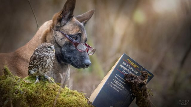 Умная собака в очках и сова читают книгу
