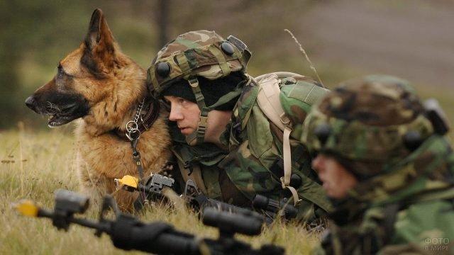 Немецкая овчарка в армии