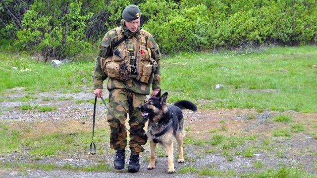 Норвежский пограничник-кинолог со служебной собакой