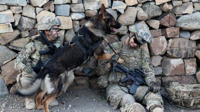 Пёс дурачится с американским солдатом