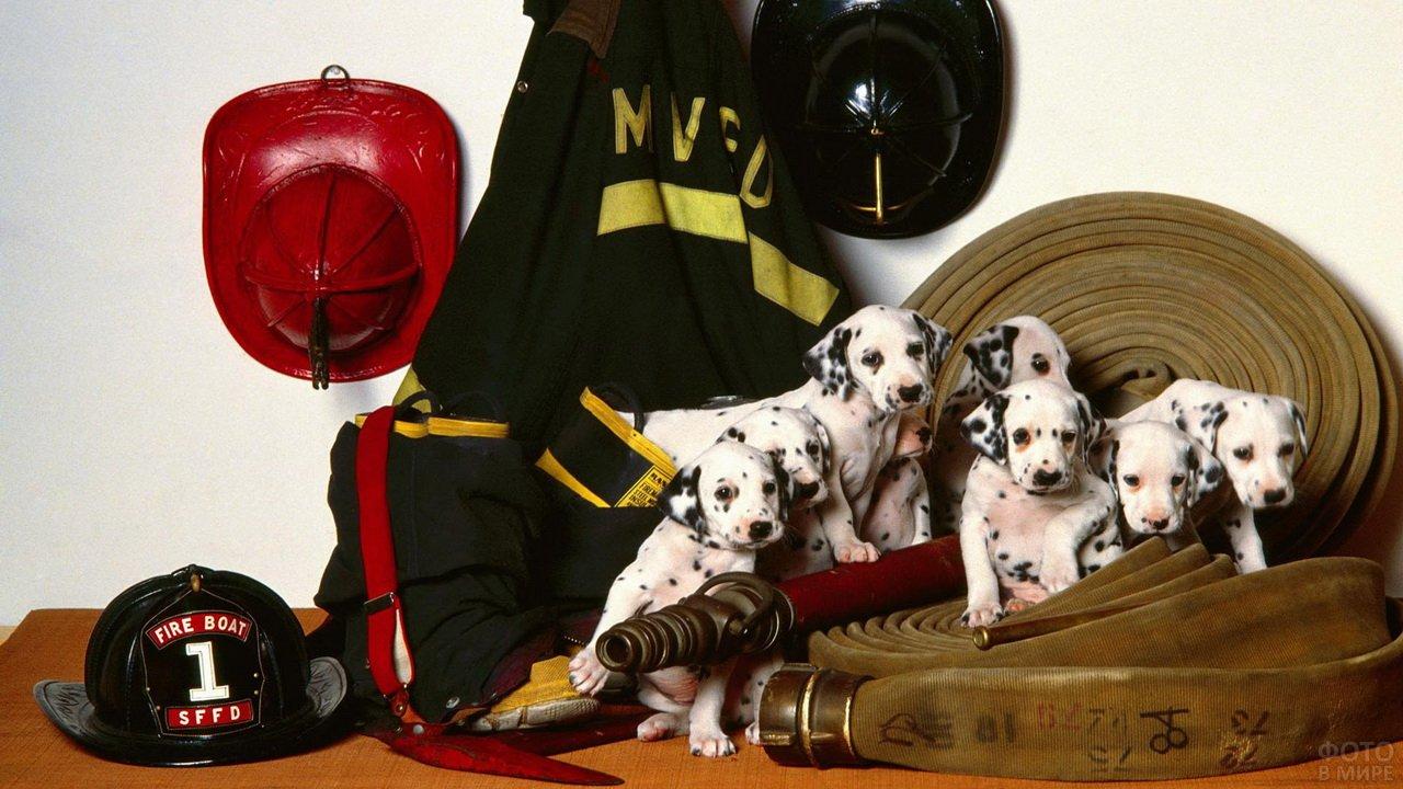 Пожарные щенки-долматинцы