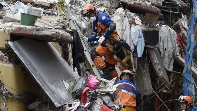 Работа японских спасателей с собакой на завале