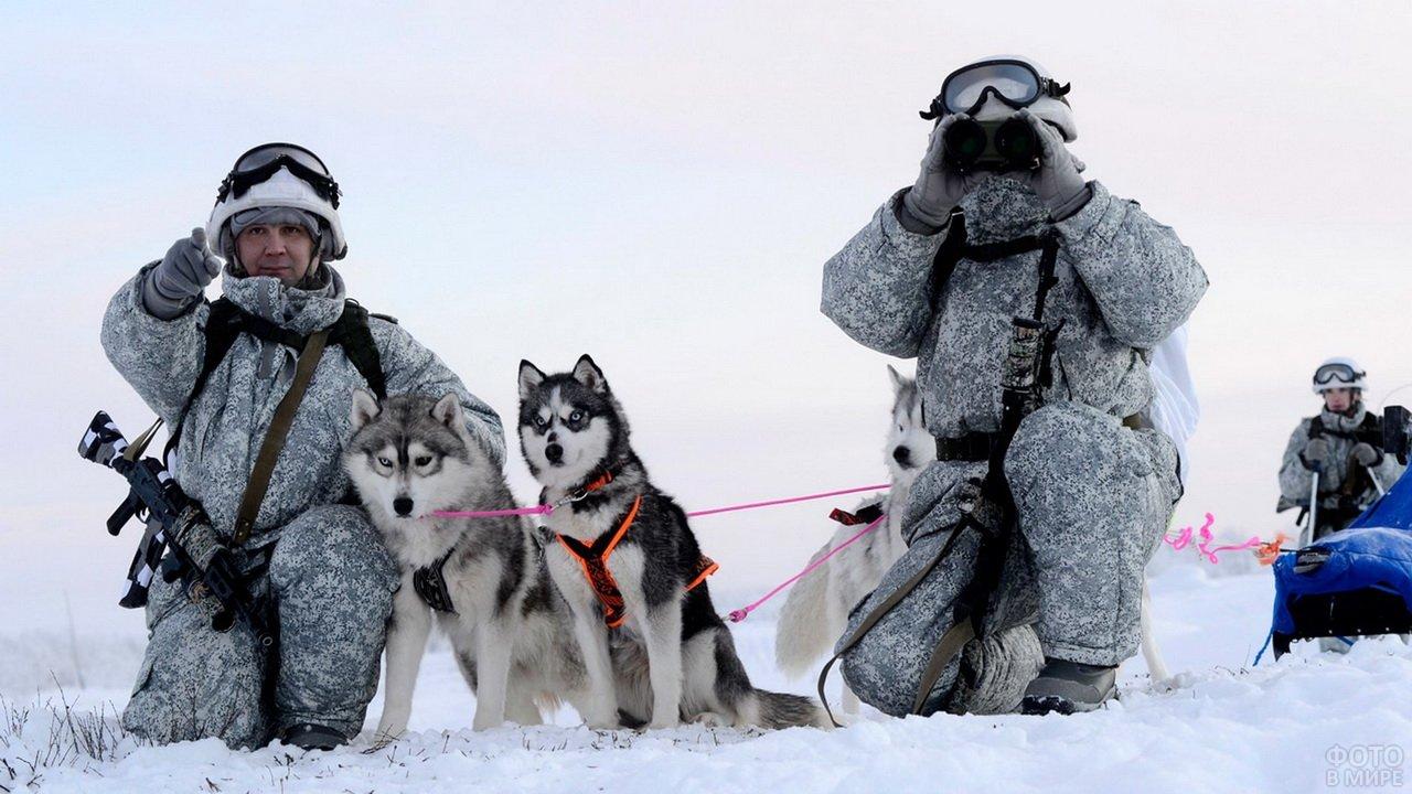 Российские войска в арктике с ездовыми собаками