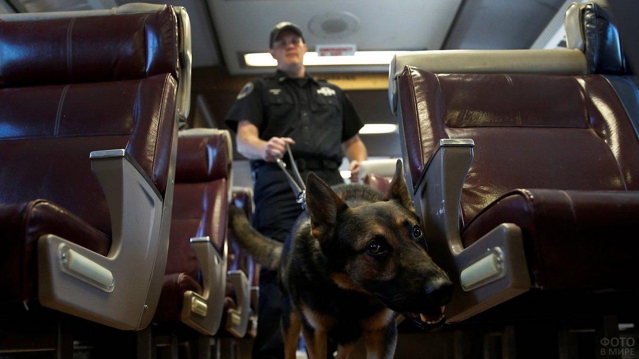 Собака ищейка и кинолок осматривают автобус
