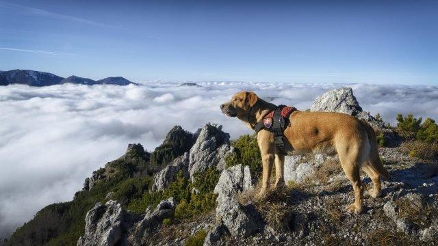 Собака на скале над облаками