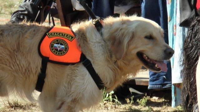 Собака спасатель на службе МЧС России