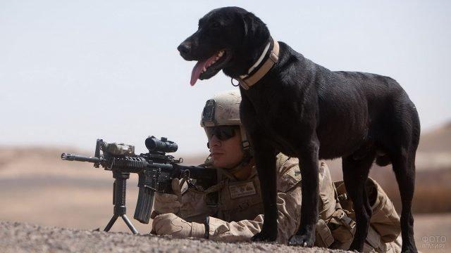 Солдат-американец с автоматом и собака чёрного цвета