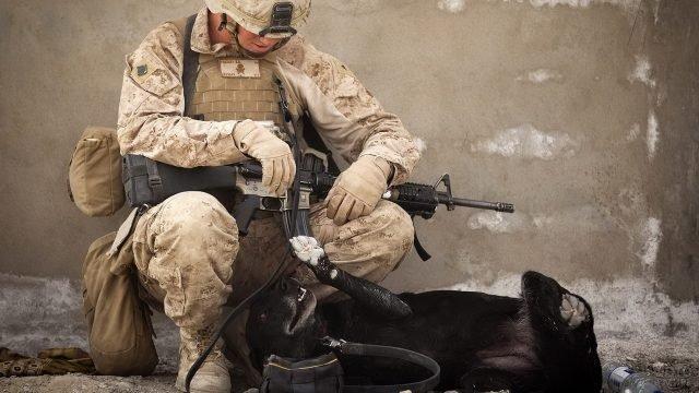 Солдат играет с собакой
