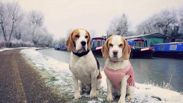 Две собаки на заснеженной набережной