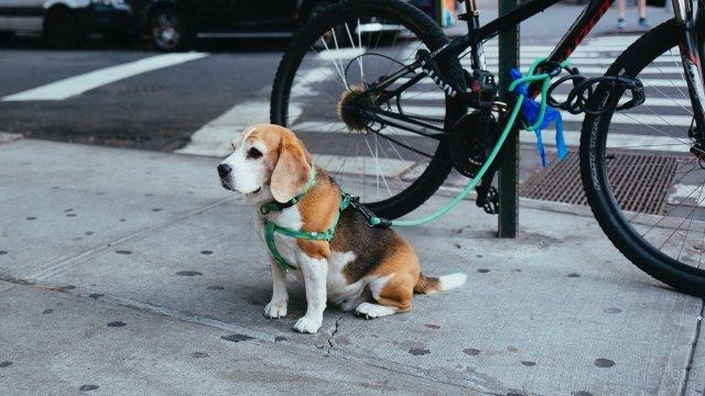 Щенок привязанный к велосипеду ждёт своего хозяина